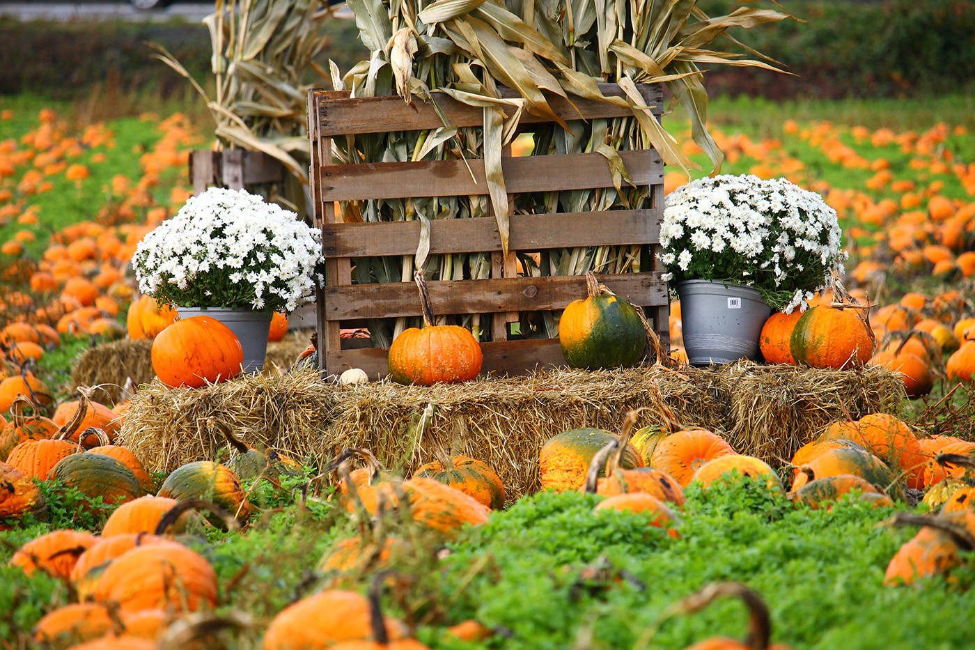 Michell's Farm pick a pumpkin is a popular spot to snap a photo, especially in the fall. (Carolyn Brooks photo)